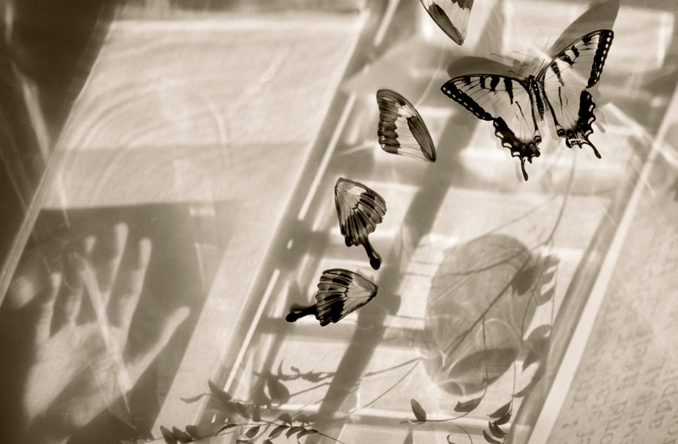 Butterfly Collection ©Julie Meridian