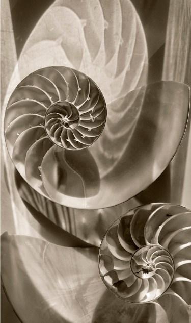 Nautilus Shells 2 © Julie Meridian