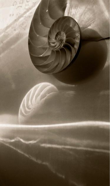 Nautilus Shells © Julie Meridian