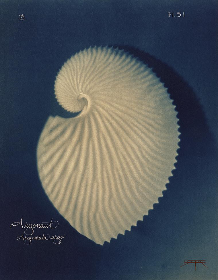 Argonaut © Laszlo Layton