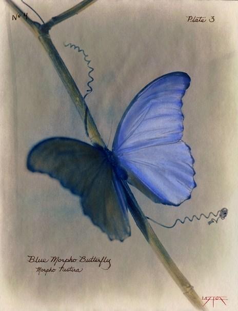Blue Morpho © Laszlo Layton