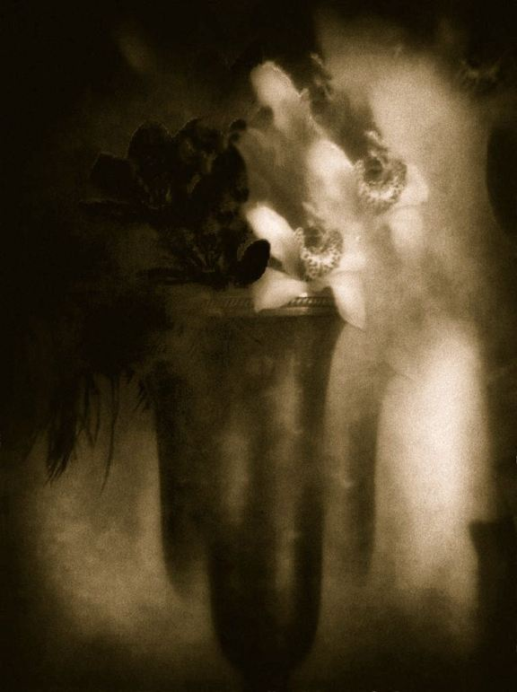 Orchids in Time © Josephine Sacabo