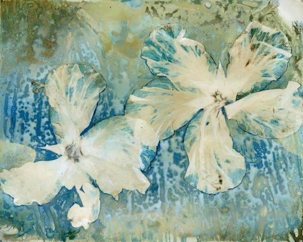 Hydrangeas © Mariana Bartolomeo