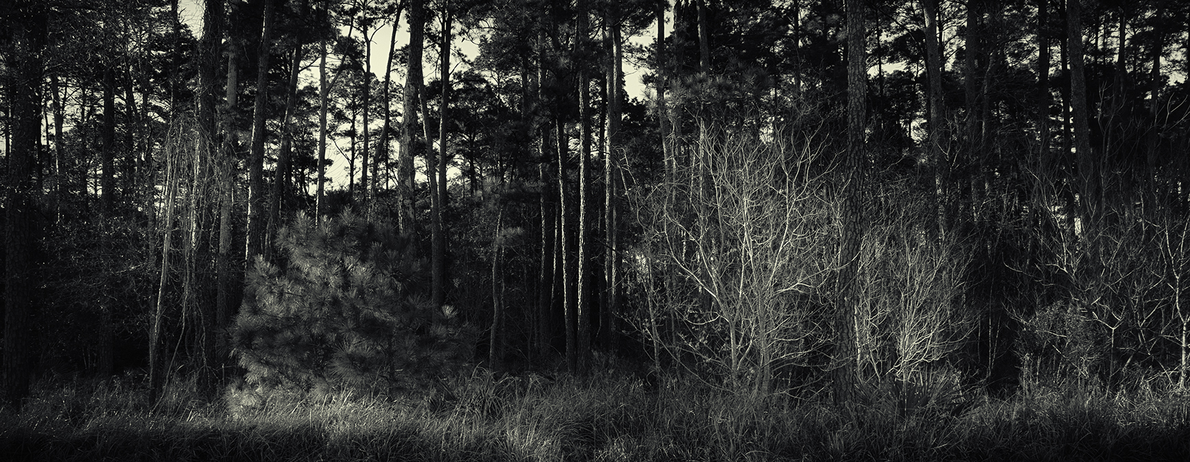 Into the Woods ©J.Rosenthal