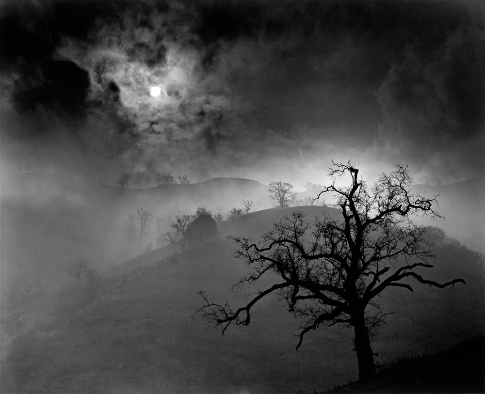 Stark Tree 1956, Wynn Bullock © Bullock Family Photography,LLC