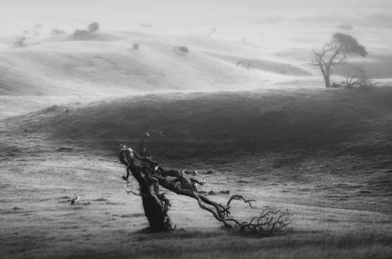 Tormented © Mihai Florea