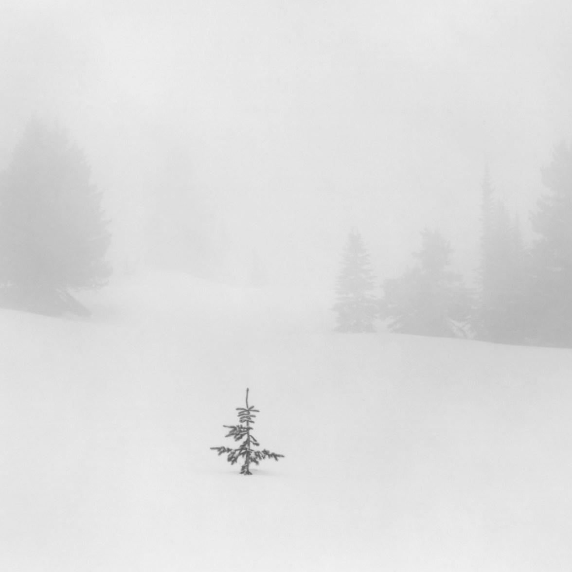 Sapling in Snow © Alan Ross