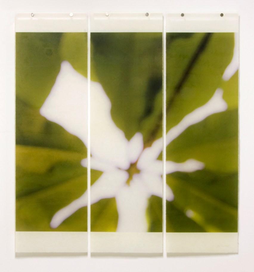 Giant Magnolia© Jeri Eisenberg