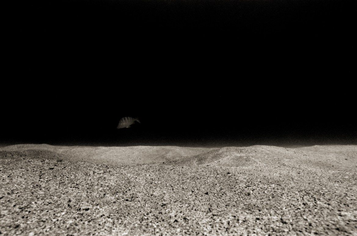 Sandscape with Passing Fish © Robin Robinson