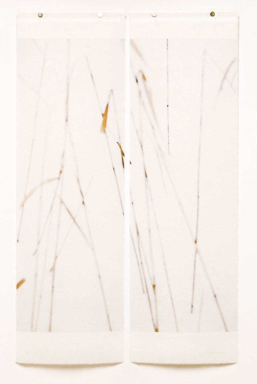 Winter Grasses, No3 © Jeri Eisenberg