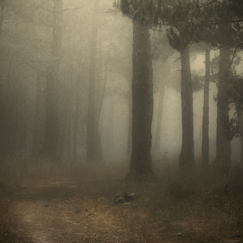 Into the Woods 5 © Eduardo Fujii