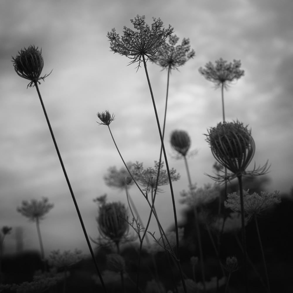 The Pond Project-103 © E.E.McCollum