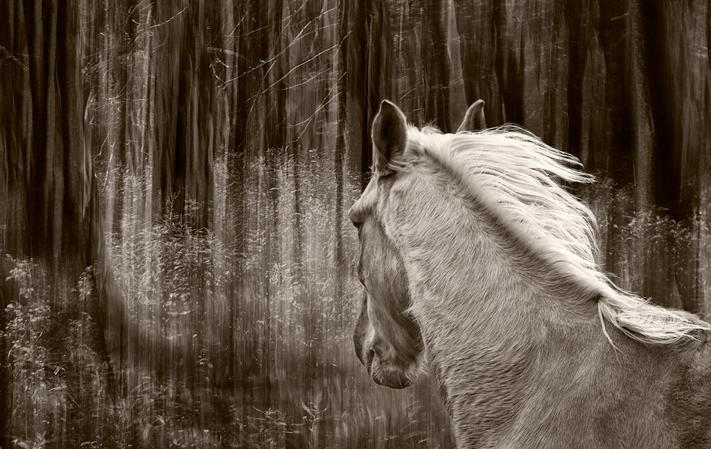 Among The Trees #3 © MaryAiu