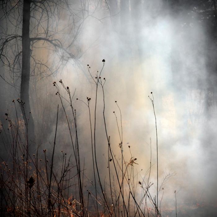 burn-no-99 Jane Fulton Alt