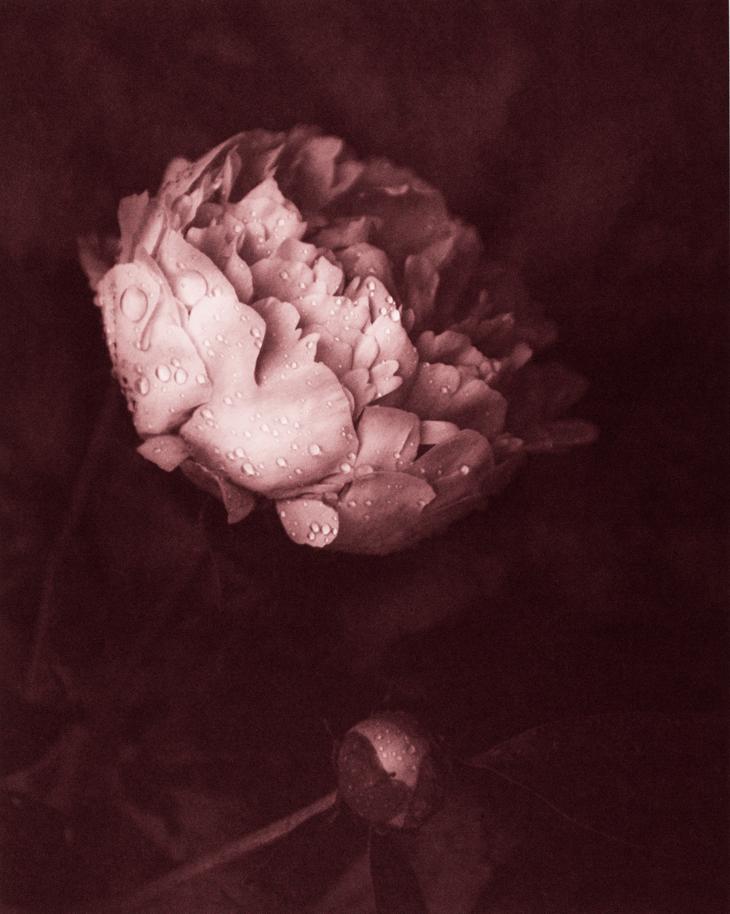 Morning Dew © Mark Nelson,Gravure