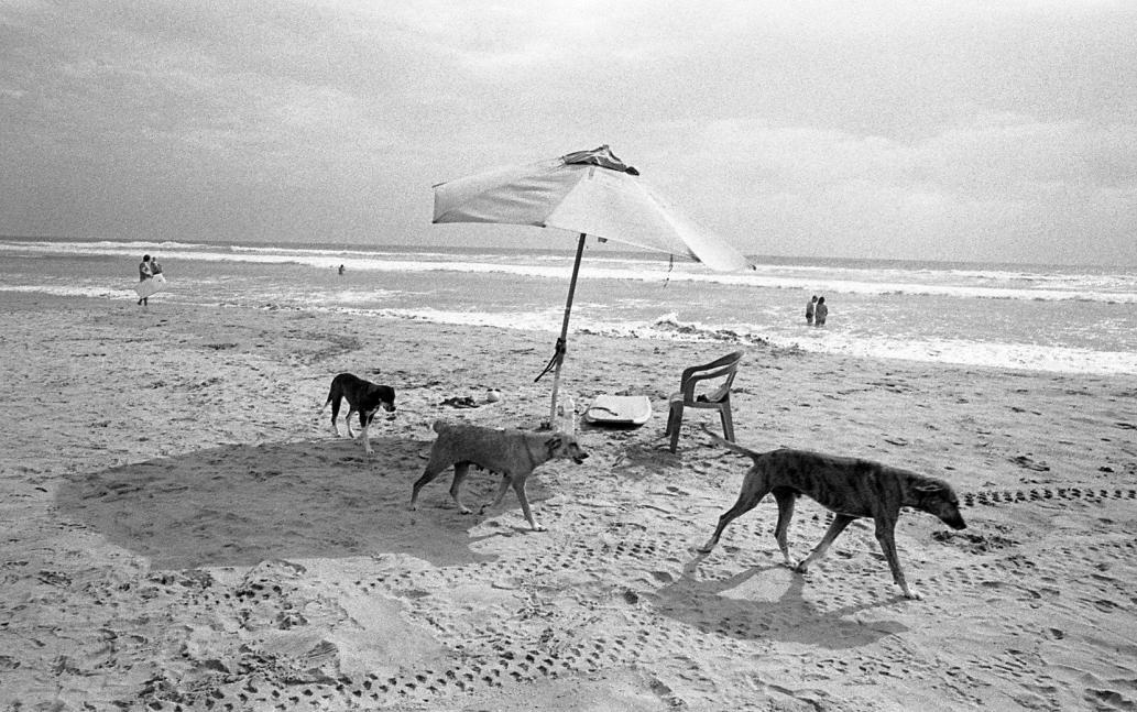 Three Dogs © David Carol