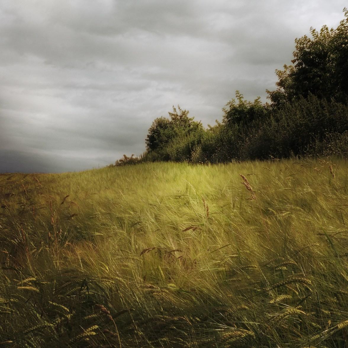 Field Study © Bernd Webler