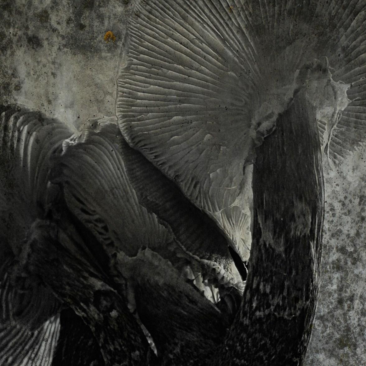 Monochrome 37 © Bernd Webler