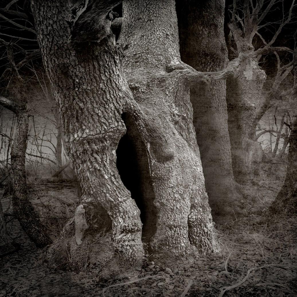 Big Old Tree © Carol Mollhagen Erb