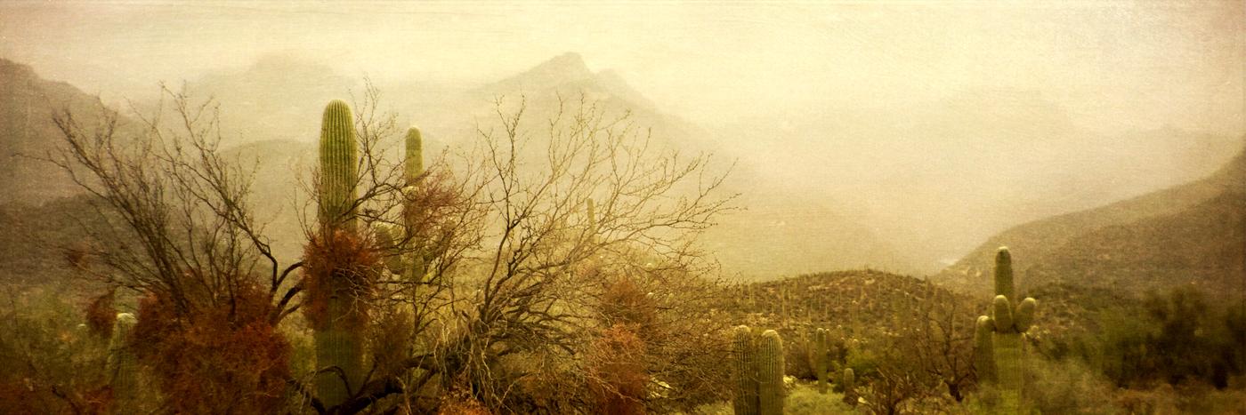 Desert Mist © Wendi Schneider