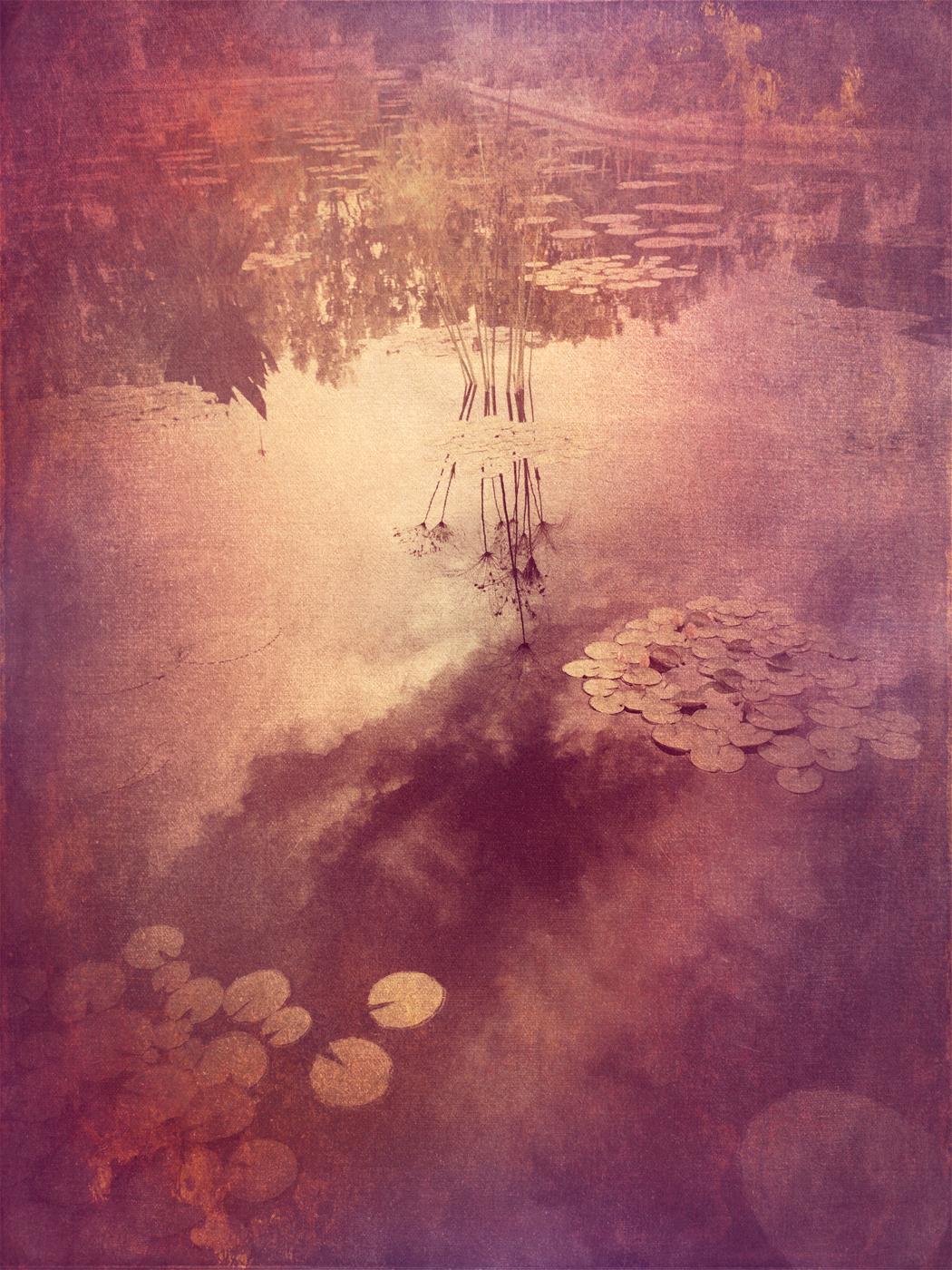 Lily Pads © Wendi Schneider