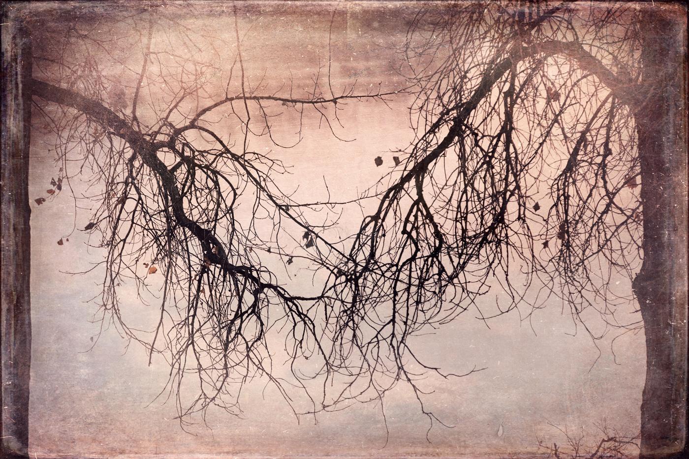 Reach © Wendi Schneider
