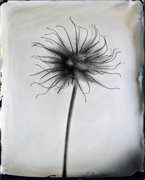 Tintype © Denis Roussel