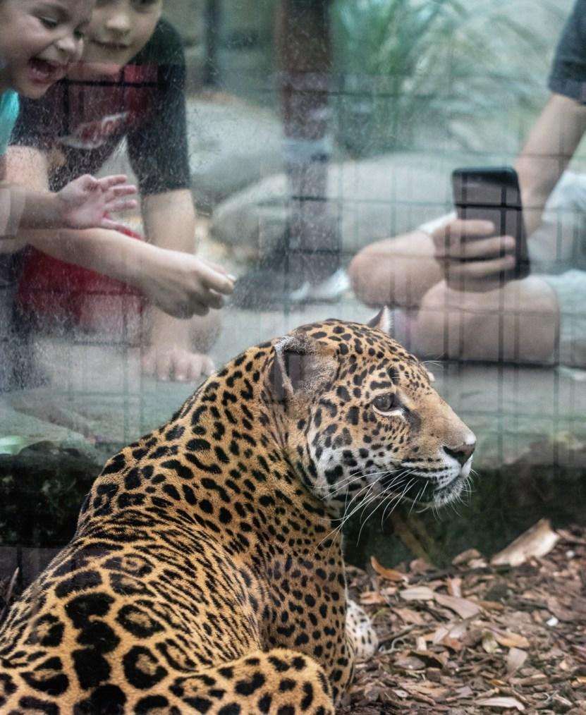 Jaguar © Karen Bullock