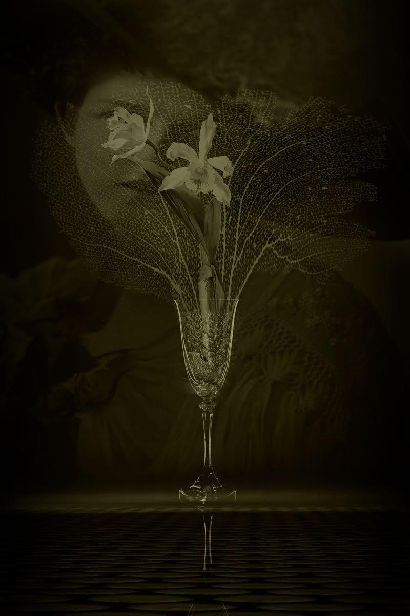 Still Life with Orchids © Eduardo Fujii