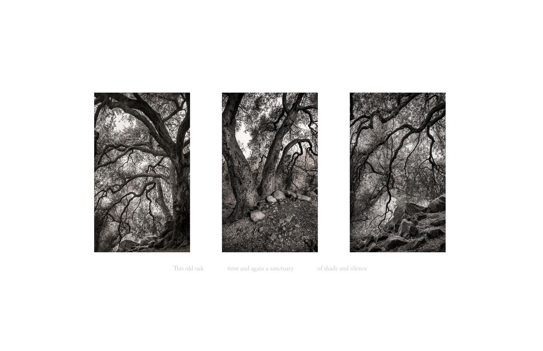 Seeing Silence 4 © Jodie Hulden