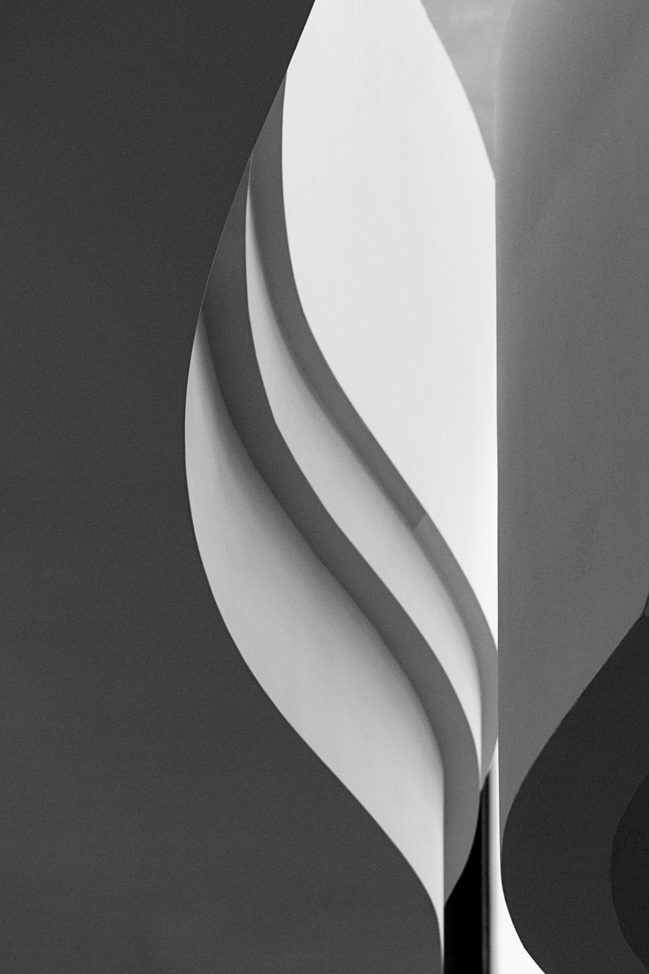 Tulip © Angie McMonigal