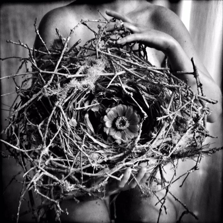 The Nest © Rachael Short
