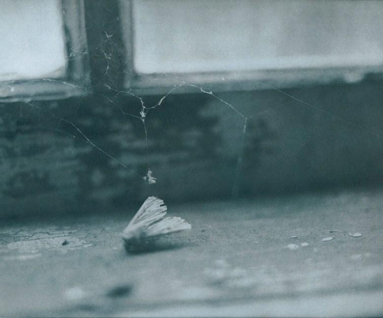 © Julia Martin