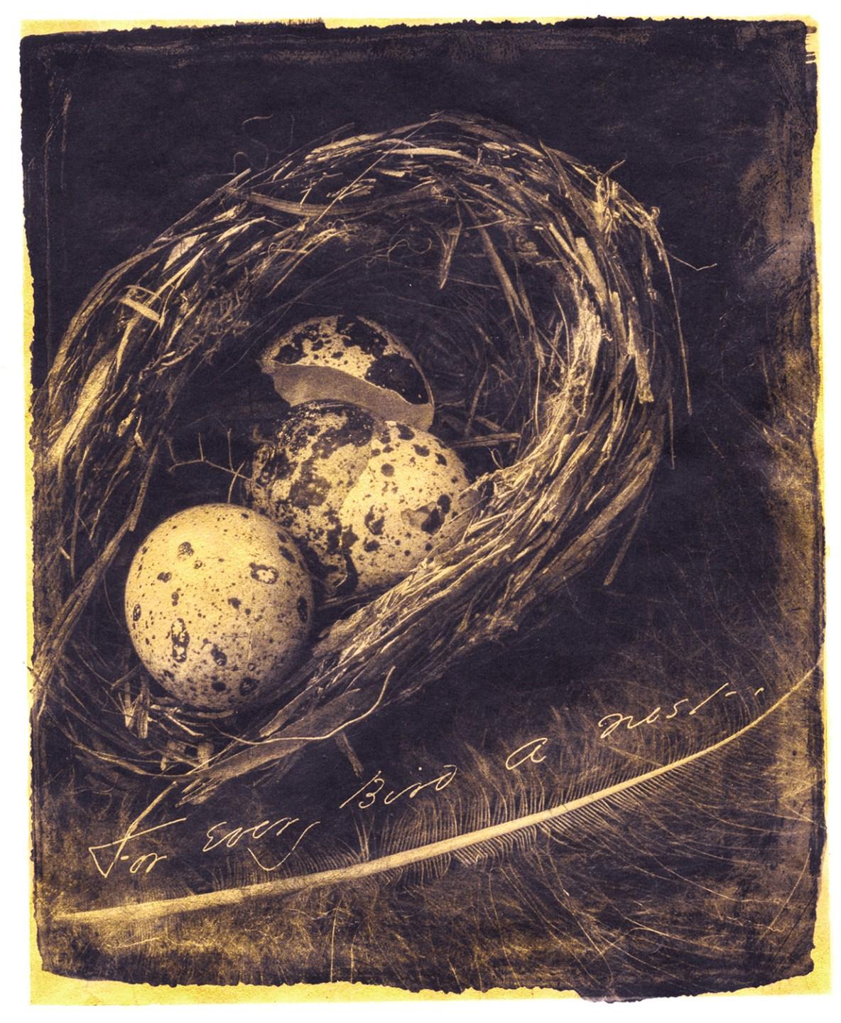 For Every Bird A Nest © Brigitte Carnochan