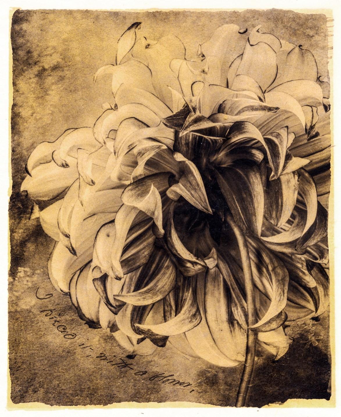 I Pieced It with a Flower © Brigitte Carnochan