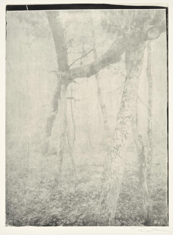 Great Oak Fallen © Robin Dintiman.
