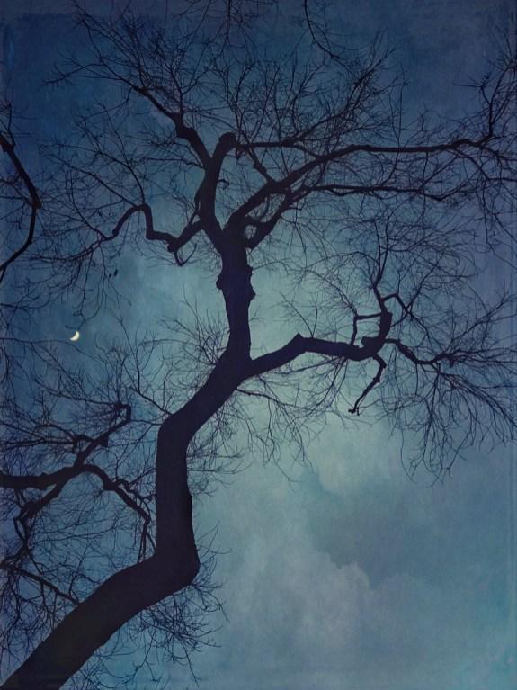 Crescent Moon © Wendi Schneider