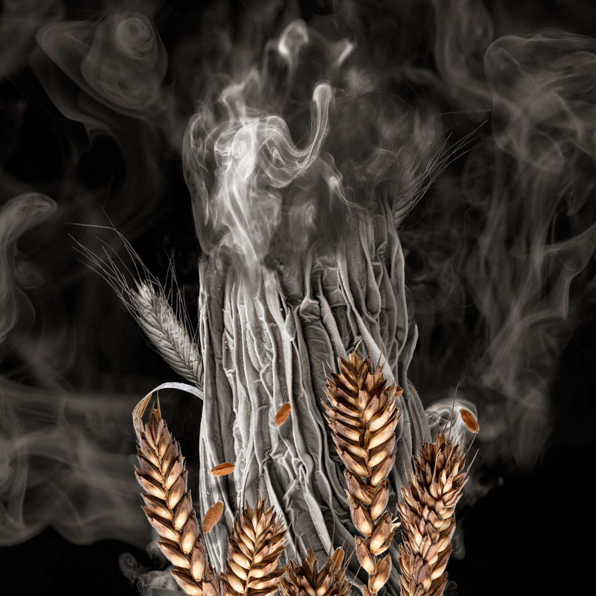 Wheat Sprout on Fire © Robert Dash