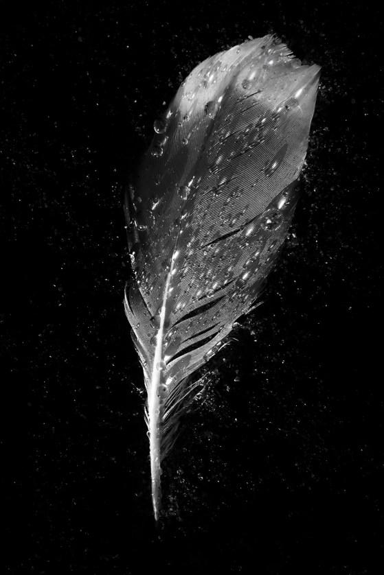 © Aviva Diamond