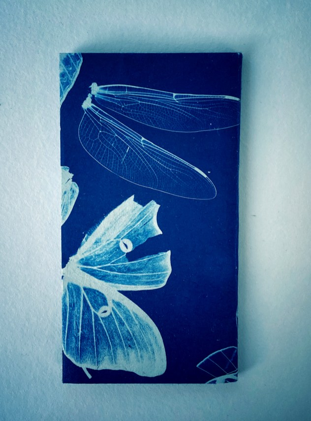 Gossamer Wings,closed © Diana Bloomfield