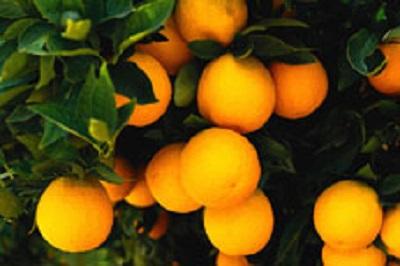 手づくり発酵ジュース教室【たんかん】 @ ATTiVAリビングフード・アカデミー | 世田谷区 | 東京都 | 日本