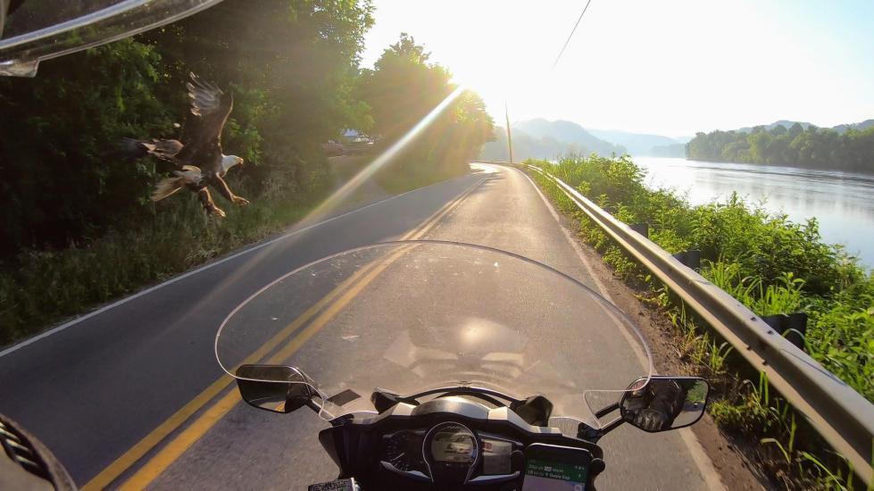Lake, sunrise and eagle