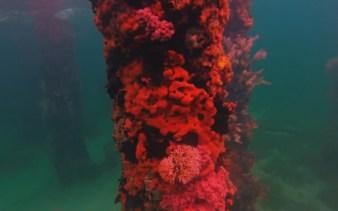 web diving 6