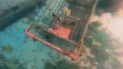 web diving 9