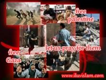 free-gaza