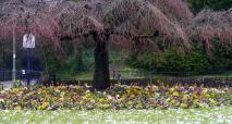 one-way system cherry tree