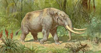 Humans and Mastodons Coexisted in Florida