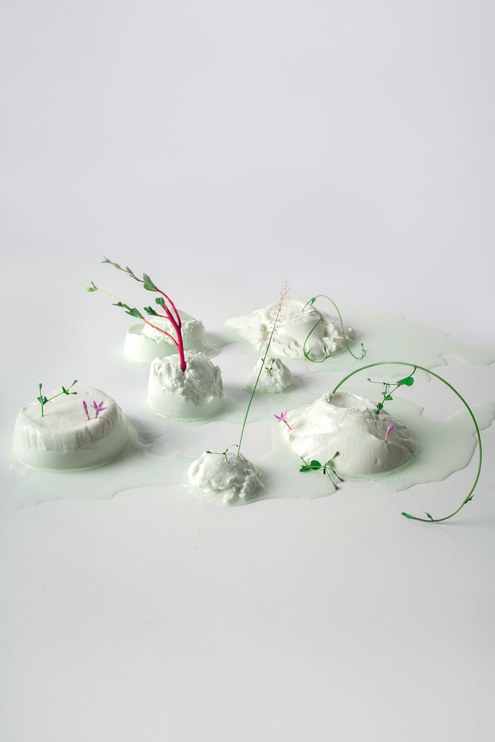 curd with flowers in it