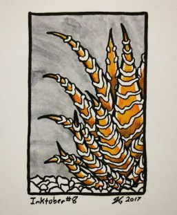 #8 – Zebra Haworthia