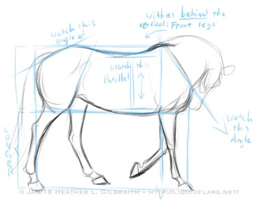 Horse Proportions Study
